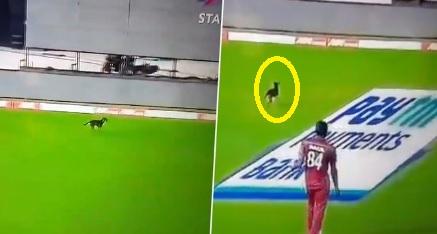 VIDEO लाइव मैच में मैदान के अंदर पहुंचा कुत्ता, दबंगई अंदाज में किया पूरे मैदान का भ्रमण Images