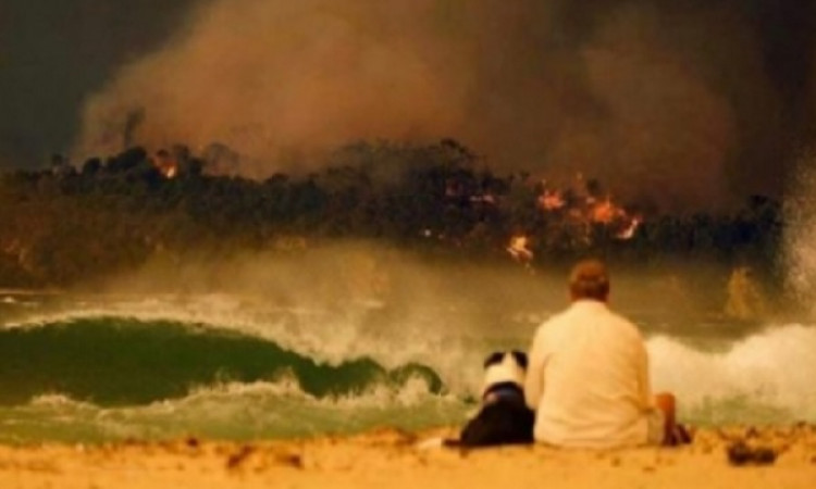 Bushfires beyond words, firefighters are real heroes: Warner Images