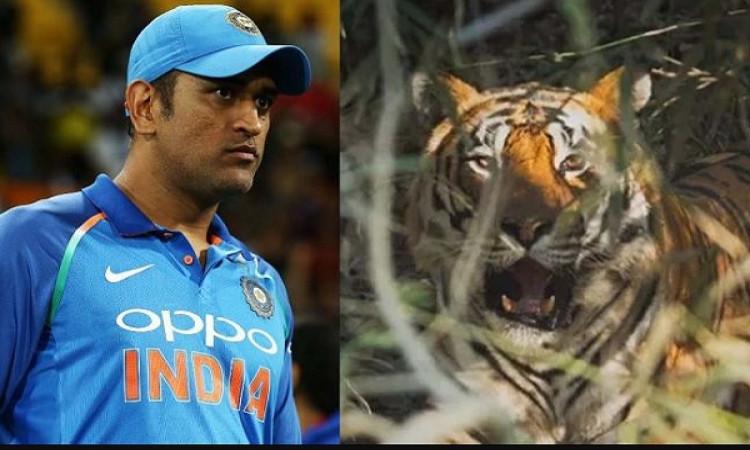 टीम इंडिया से दूर धोनी ने किया असल जिन्दगी में बाघ का सामना ! Images