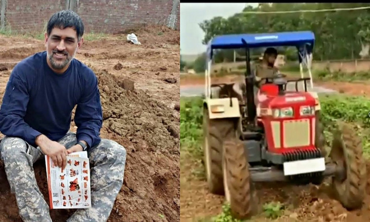 cricket images for MS Dhoni sell the vegetables grown in his farmhouse in Dubai