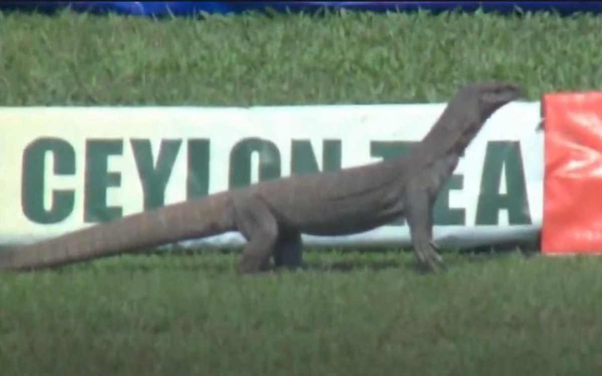 Cricket Image for जब मैदान पर दिखी 'मॉनिटर छिपकली', आईसीसी ने कहा- 'श्रीलंका ने एक अतिरिक्त फील्डर क