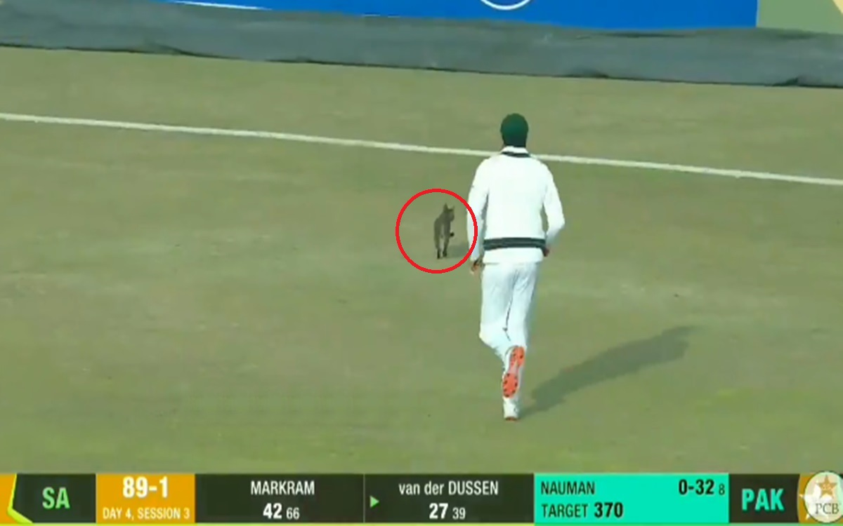 Cricket Image for Azhar Ali Chases Cat On The Field