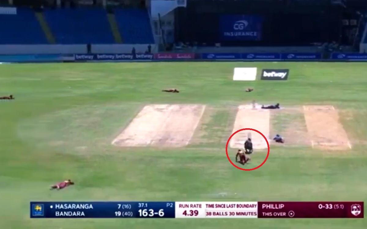 Cricket Image for Bees Interrupt During West Indies And Sri Lanka Third Odi Match