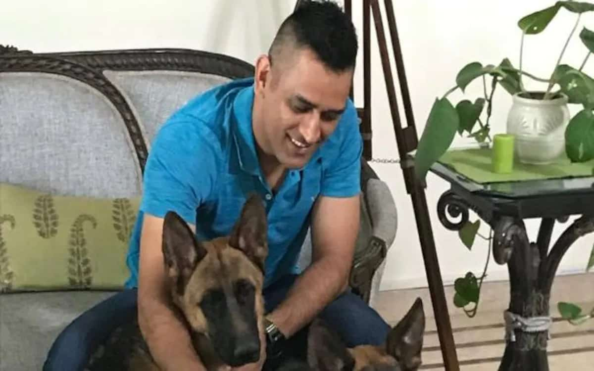 A new guest named Chetak came to Dog Lover Dhoni's house, wife Sakshi wrote a welcome message