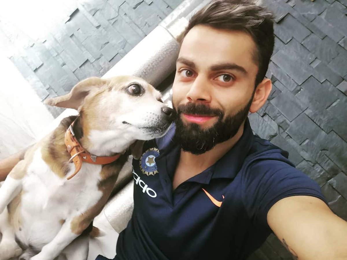 Cricket Image for Virat Kohli Foundation Inaugurates Trauma And Rehab Centre For Stray Animals